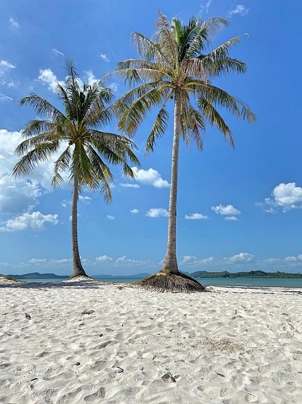 Palmut Laem Had rannalla Thaimaassa