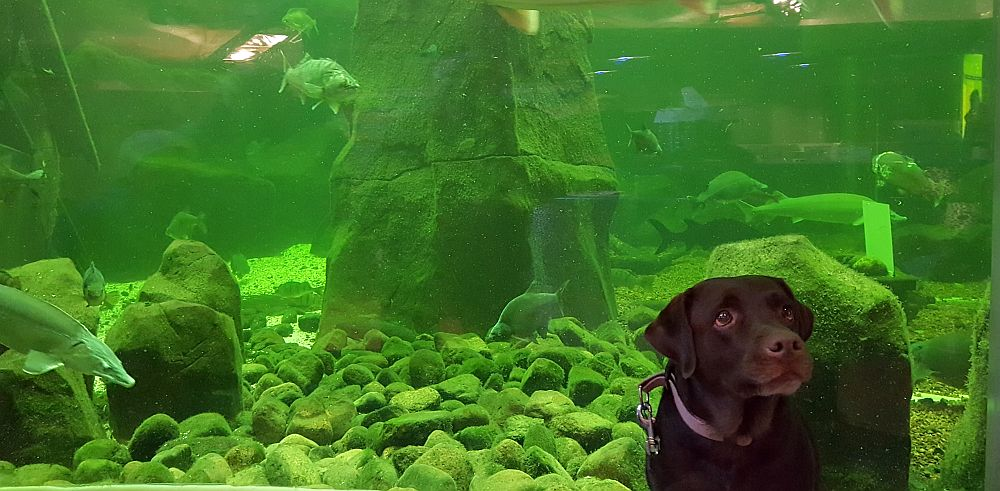 Koira mukana Maretariumissa