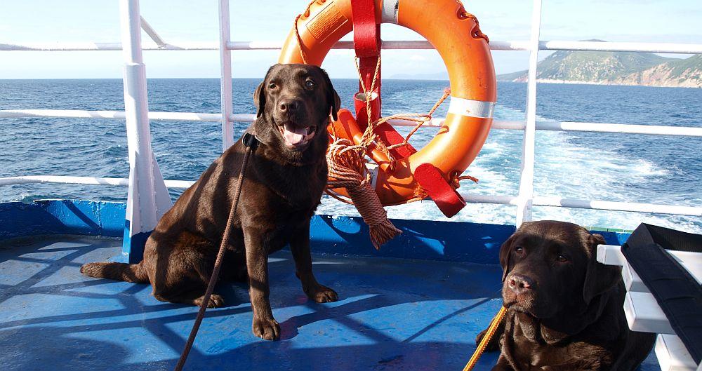 Koirat mukana laivalla