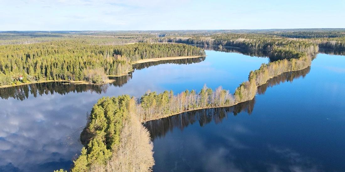 Liesjärven kansallispuiston Kyynäränharju