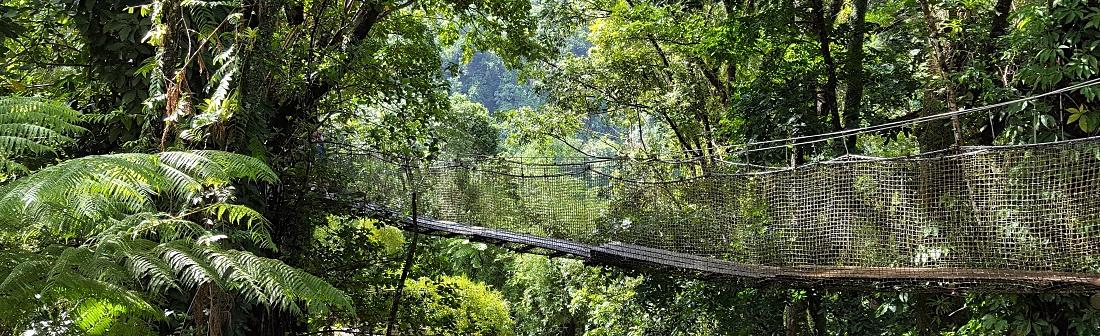 Martinique Jardin de Balata kasvitieteellinen puutarha