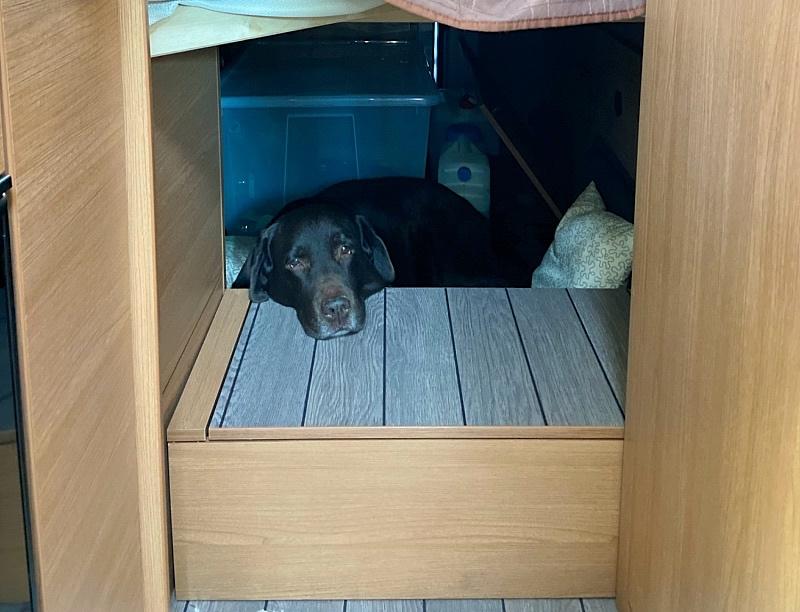 Koiran oma peti retkeilyautossa