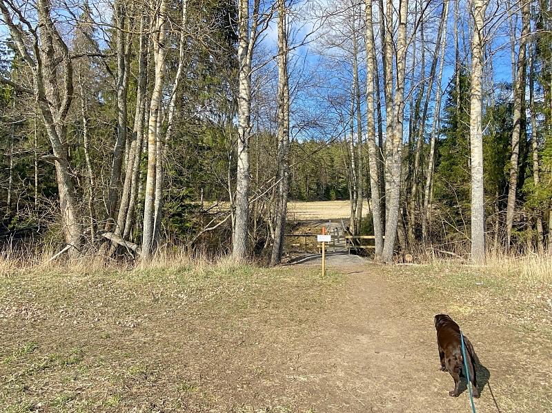 Reitti jatkuu pellolta takaisin metsään