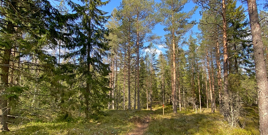 Risslan metsäpolku Fiskarsissa