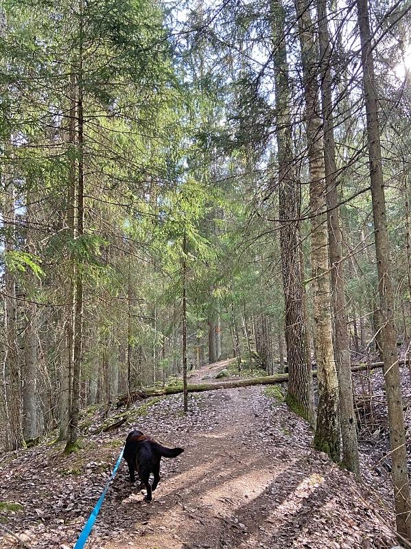 Risslan metsäpolun reitti