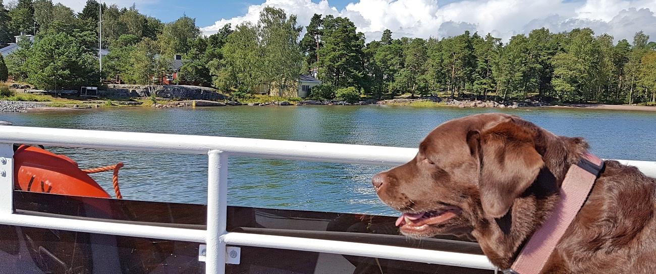 Koira mukana Espoon saaristoveneessä