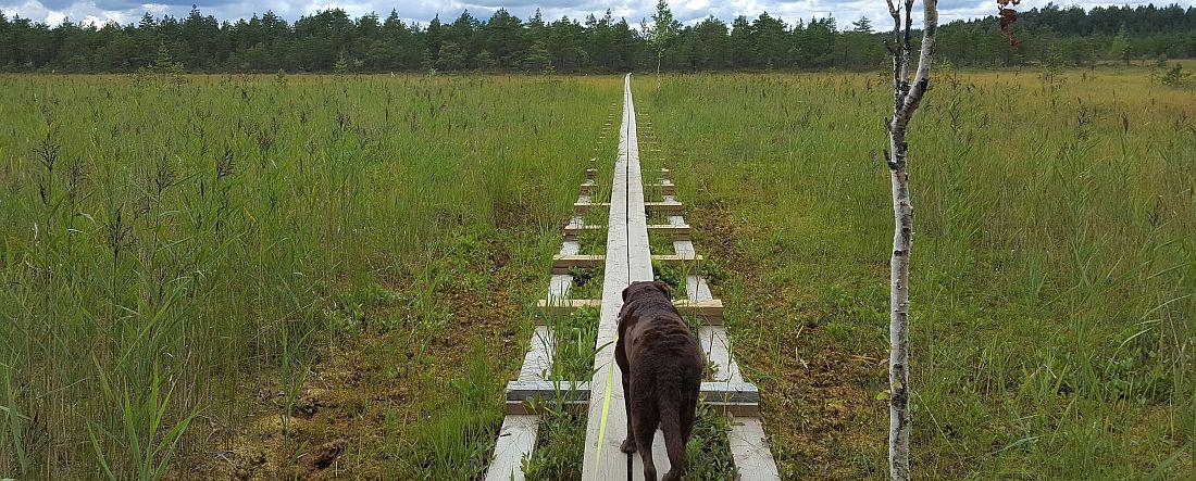 Savojärven kierros koiran kanssa