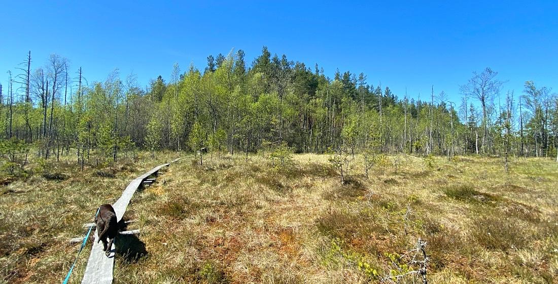 Teijon kansallispuistossa Nenustan kierros suoalueella
