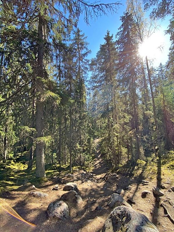 Kivikkoista polkua