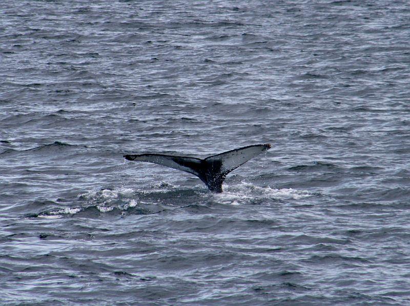 Valaiden katseluretkellä Islannissa